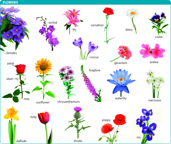 flower meaning of flower in Longman Dictionary of Contemporary